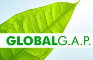 global-gap-agroiteaf
